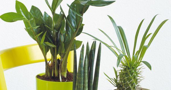 vous ne savez pas comment associer vos plantes voici une id e truffaut plantes d. Black Bedroom Furniture Sets. Home Design Ideas