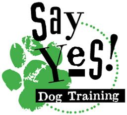 Planning For Success With Your Dog Training Agility Training For