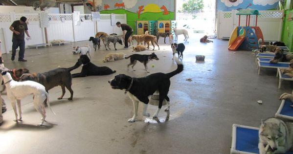 Love The Fences Dog Boarding Kennels Dog Daycare Dog Hotel