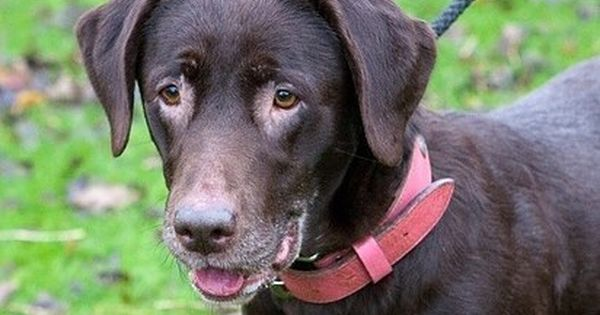 Minnie Rspca Radcliffe Nottingham Old Dogs Older Dogs Dogs