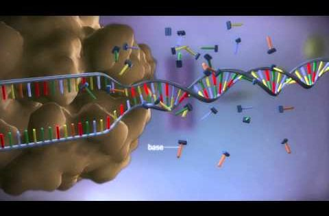 Learn.Genetics
