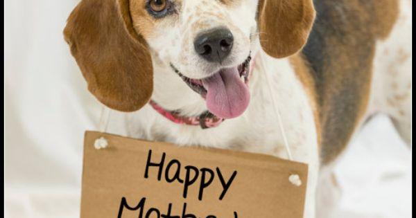 Happy Mothers Day Meme Persian Cat