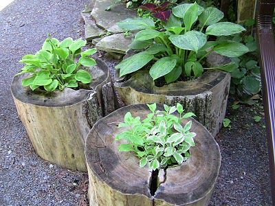DIY Outdoor Decorating Ideas - plant holders out of big wood stumps