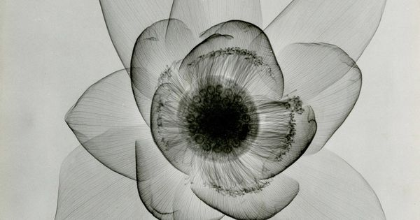 Check out these x rays of flowers from the 1930s la for Tattoo la jolla