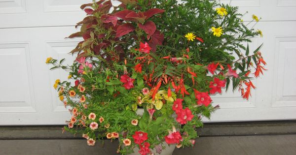 a mixture of begonia bonfire coleus alabama sunset euryops daisy red petunia and calibrachoa. Black Bedroom Furniture Sets. Home Design Ideas