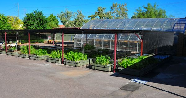 Project aquaponics rhibafarms in chandler az a major for Arizona aquaponics