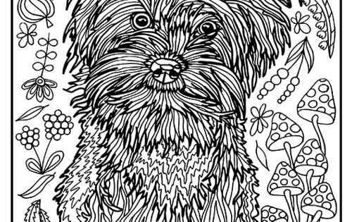 Yorkie coloring pages for adults yorkie best free for Yorkie coloring pages
