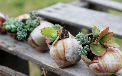 Jardin dans une coquille d 39 escargot tr s bonne id e diy et id es r cup pinterest - Coquille d oeuf dans le jardin ...