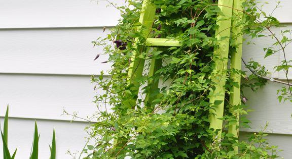 echelle comme tuteur de plante jardin pinterest jardins chelle et chelles en bois. Black Bedroom Furniture Sets. Home Design Ideas