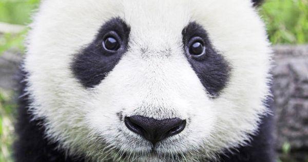 How To Treat Pandas Naturally