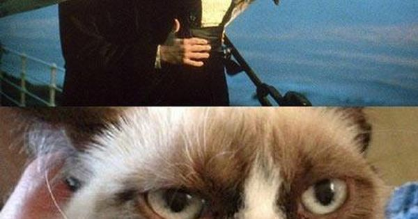 Angry Animals Google Search: Angry Cat Meme - Google Search