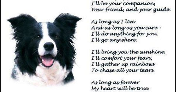 Pin By Cyndi Reid On Border Collies Collie Border Collie Dog Poems