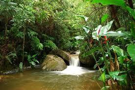 Resultado De Imagem Para Amazonia Brasileira Fauna E Flora Amazonas Brasil