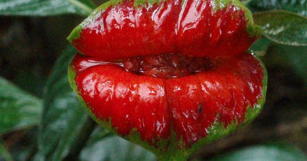 Amazon Rainforest Plants Buzzle The Rainforest Along The Mighty