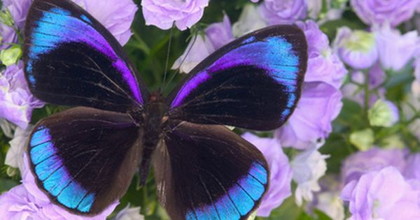 A Beautiful Butterfly With An Exquisite Design And Shades
