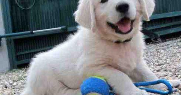 ...I wanna puppy