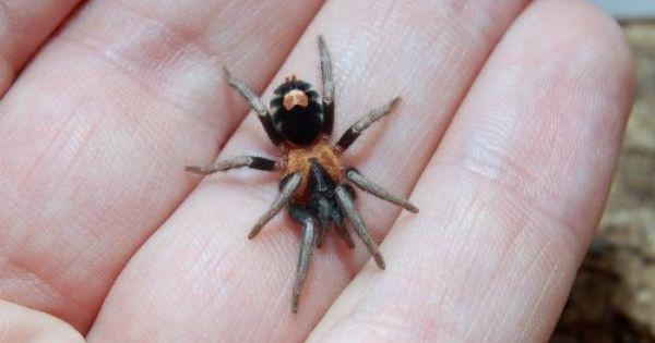 4701c83c01d691f8cb8dc48012d96004 - How To Get Rid Of Crab Spiders In Hawaii