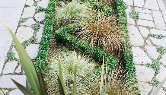 Front yard sidewalk garden ideas sidewalks grasses and for Front yard ornamental grasses