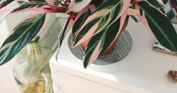 Pink And Green House Plants Help For A Lively Change To