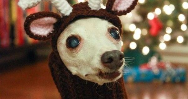 Free Crochet Dog Reindeer Hat Pattern : Crochet Dog Hat Free Patterns with Video Reindeer ...