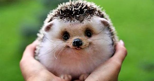 Awwwwwwww!!!!! Happy hedgehog! This kinda made my day.. I don't care if