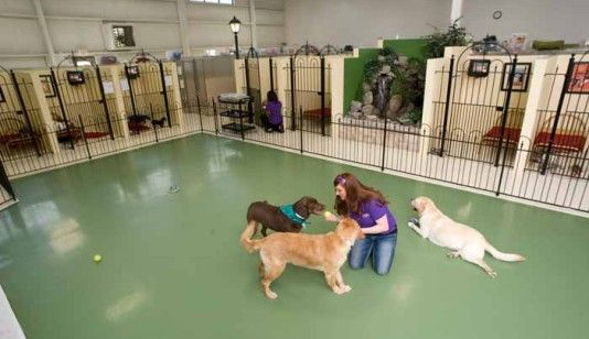 Like The Central Area And How I Can See Into All The Kennels Dog