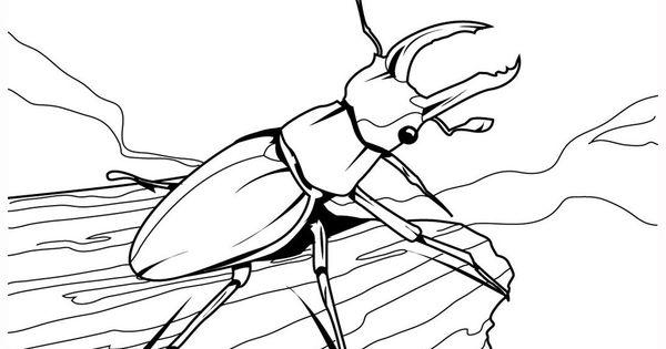 71 Bug Ledningsdiagram