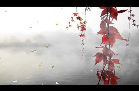 خلفية متحركة 4 Youtube Nature Gif Gif Animated Gif