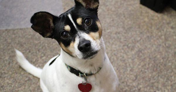 Pet Resources From Schertz Animal Hospital From Online Pet
