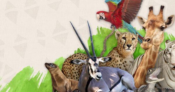 Wildlife World Zoo Aquarium Is A 215 Acre Zoo And