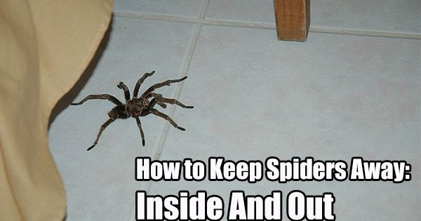 How To Keep Spiders Away – Inside And Out