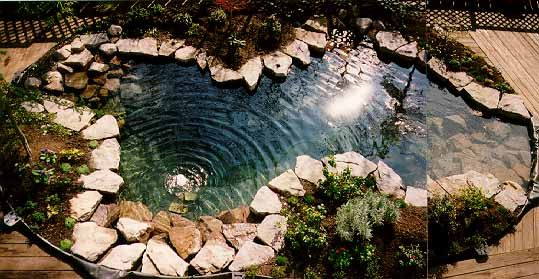 Pool with rock landscape pinterest fish ponds for Koi pond swimming pool conversion