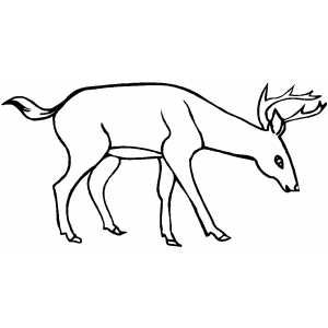 Drinking Deer Printable Coloring Page Free To Download And Print