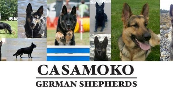 Casamoko Shepherds German Shepherd Breeders Shepherd German Shepherd
