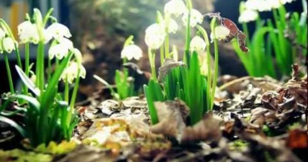 Amazing Nature By Chokchai Love King Sensational Time Lapse Video Of Flower Growth And Time Passing In Nature Amazing Nature Nature Flowers