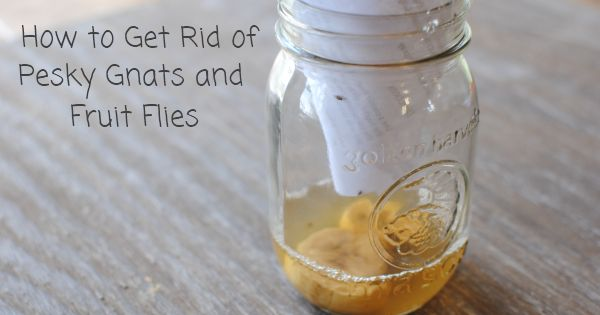 how to get rid of gnats and fruit flies oh dear god i hope this works great ideas. Black Bedroom Furniture Sets. Home Design Ideas