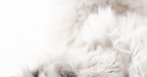 Cat - fine photo