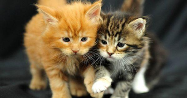kittens holding hands