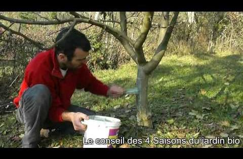 Terre vivante badigeonner les arbres fruitiers les for Jardin et saisons