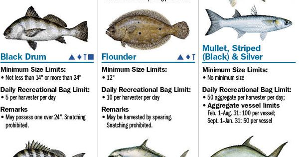 Coastal species florida saltwater fishing regulations for Florida state fishing license