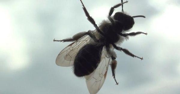 13 astuces naturelles pour chasser les mouches d finitivement messages et orange - Comment chasser les mouches ...