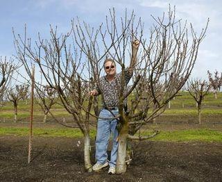 Gardenwright Garden Design Recipe Of The Week A Wall Of Fruit Growing Fruit Trees Espalier Fruit Trees Pruning Fruit Trees