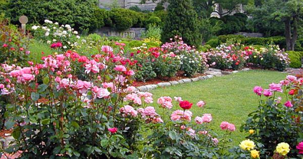 Bishop S Garden S Roses For Perennial Bed