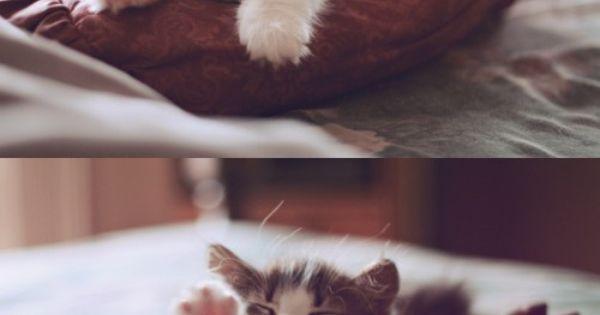 adorable sleepy kitty