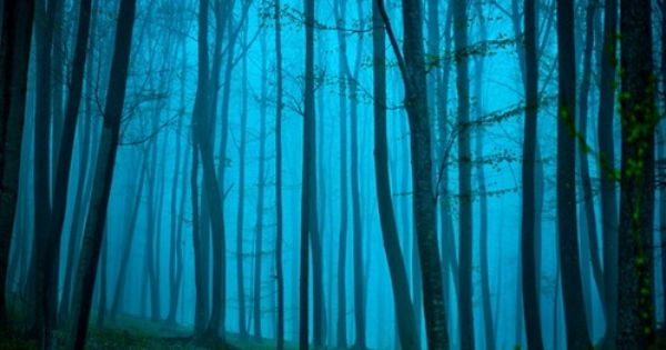The forest that time forgot beckons with a softly pale blue light.