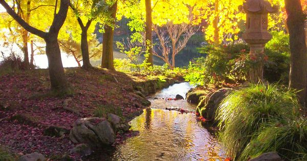 Japanese Garden Woodward Park Fresno Ca Photo By Karen Mcclintock Fresno Ca In The