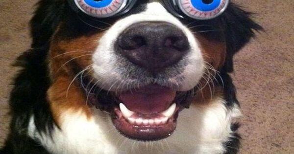 Funny animals wearing glasses photo gallery ogen te grappig en gekke ogen - Ogen grappig ...