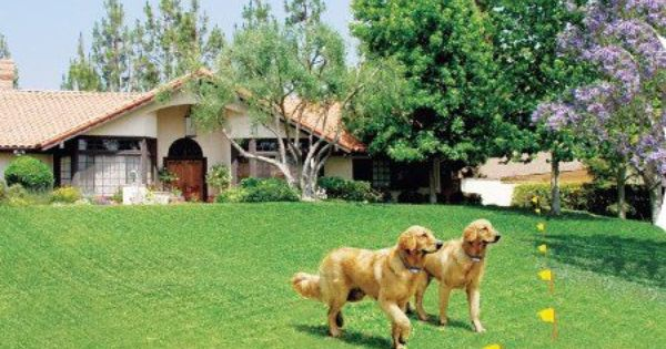 If You Ve Ever Found Yourself Driving Around Your Neighborhood Calling Out The Window For The Family Dog You Ve Probably Th Dog Fence Wireless Dog Fence Dogs