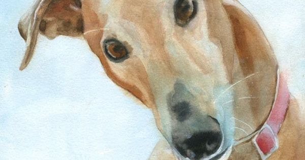 Greyhound dog art Print of my watercolor painting by ...