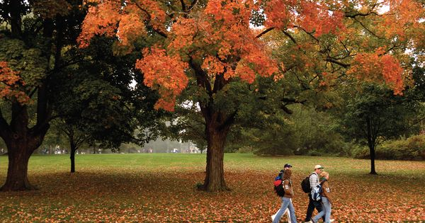 autumn on campus at university of guelph guelph on. Black Bedroom Furniture Sets. Home Design Ideas